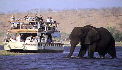 Learn how African elephants communicate on an African safari vacation in East Africa or Southern Africa, safari operators listed.
