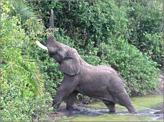Elephants in Serengeti National Park, Tanzania.