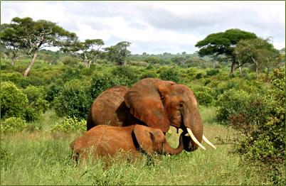 African nature holidays, Kenya safaris, Tanzania safari vacations, South Africa safaris.