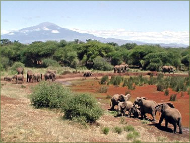 African safari adventure holidays with elephants.