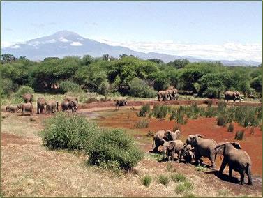 African safari adventure holidays with elephants.