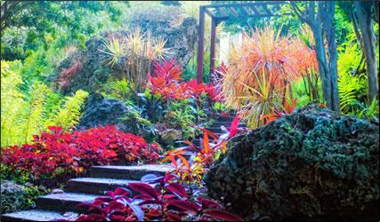 Andromeda Gardens, Barbados: Eastern Caribbean Exotic Gardens Photo Essay.