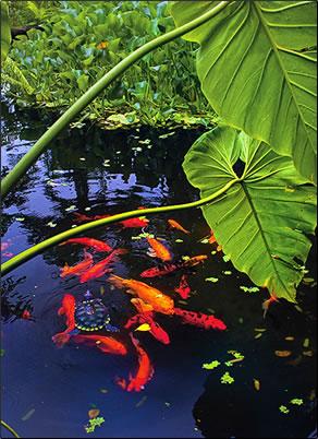 Bay Gardens, Grenada: Eastern Caribbean Exotic Gardens Photo Essay.