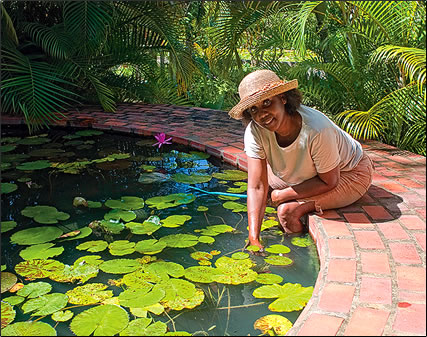 Benthams House Water Gardens, Barbados: Caribbean gardens photos.