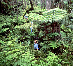 Hawaii Forest & Trail offers guided rainforest tours on Hawaii's Big Island
