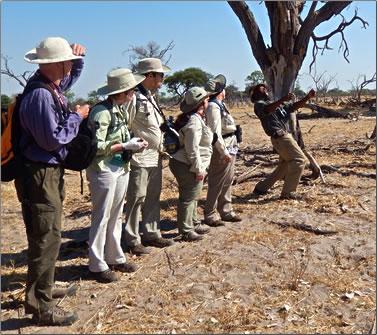 Dung spitting contest on walking safari in Botswana.