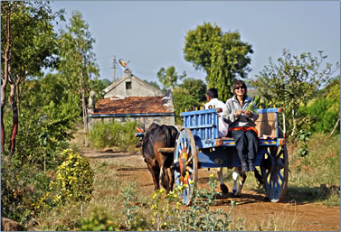 India agri tourism at Morachi Chincholi, a bullock cart ride around the village.