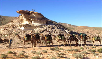 Camel train from Outback Australian Camels, treks with senior adventure travelers through the Simpson Desert.