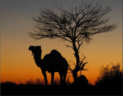 Sundown in the Australian desert, senior adventure travel.