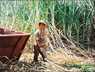 Gay and Robinson Field and Factory Tours take visitors into 55,000 acres of sugar cane plantations.