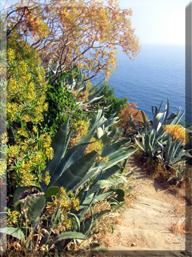 Walking or hiking holidays between villages in Cinque Terre National Park, Italy.