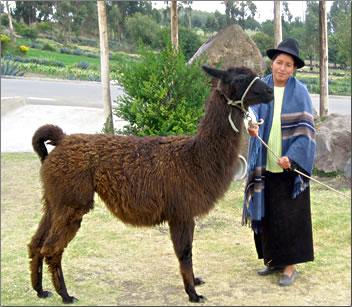 Llama commune: Ecuador's Andes Highlands offer culture, unique national parks and historic hacienda vacations.