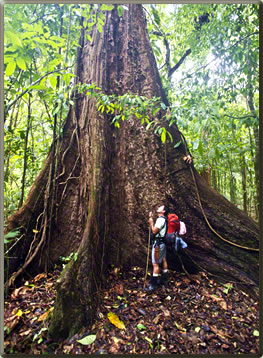 Corcovado, one of Costa Rica's top National Parks.