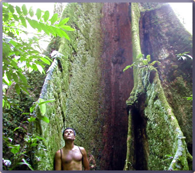 Costa Rica is distinctive in Nature, ecotourism.