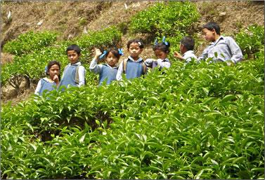School children: Volunteer Holidays on Darjeeling, India Tea Estate.