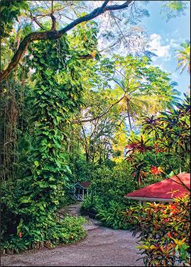 Diamond Botanical Gardens, St Lucia: Caribbean gardens photos.