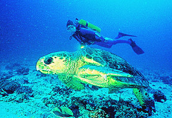 Diver and turtle meet in the waters of Australia's Heron Island.