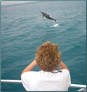 Wild Dolphin Foundation offers volunteers opportunities for boat-based dolphin and whale research.