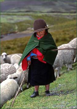 Young indigenous Ecuadorian girl with sheep.