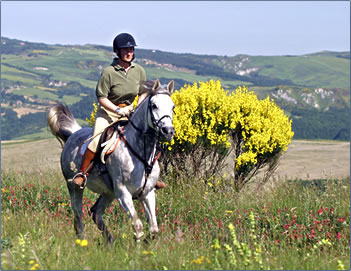 Horseback riding vacations and lessons in Tuscany, Italy.