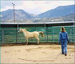 The Equine Experience is an activity at Miraval, an Arizona health resort.