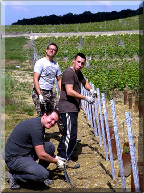 Field workers in Champagne Lecomte, Champagne region of France.