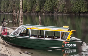 Fraser River Safari tour boat does eagle watching excursions.