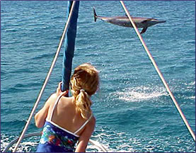Hawaiian spinner dolphin jumping out of the ocean.