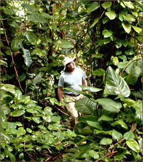 Hike Maui offers rainforest, waterfall and volcano tours on Maui.