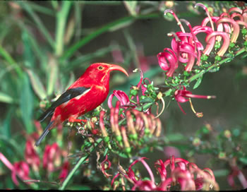 Hawaii vacations offer opportunities for bird pictures.