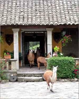 Enjoy Ecuador hacienda vacations like Hacienda San Agustin de Callo.