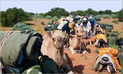 Loading the camels for a seven-day trek in Australia's Simpson Desert.