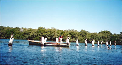 Mayo indians are a part of Mexican culture and tourism.