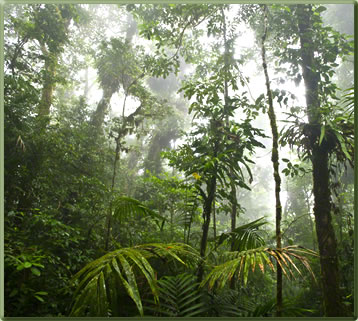 Monteverde, one of Costa Rica's best parks for nature viewing.