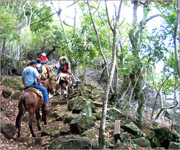 Molokai Mule Ride offers mule tours to Kalaupapa National Historic Park, leper colony on Molokai, Hawaii.