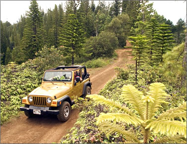 Lanai's Munro Trail by 4WD or by hiking.