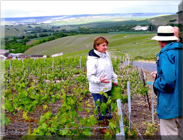 Vineyard tour: Tasting champagne in Champagne.
