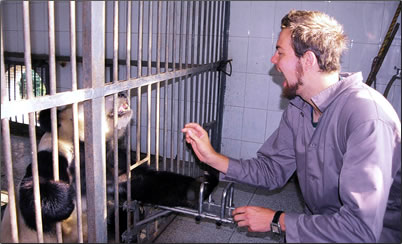 China Volunteer Vacations: training pandas to take medications.