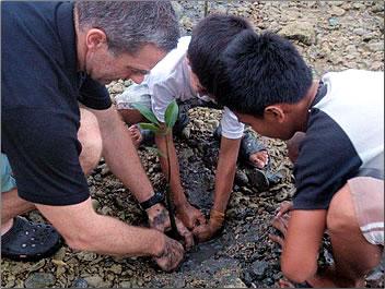 Planting mangrove seedlings in the Philippines: Volunteer Vacations with Global Volunteer Network.