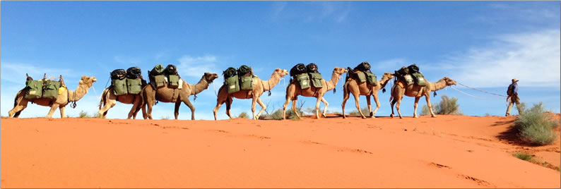 A camel train crossing the desert: camping and trekking in Australia's Simpson Desert.