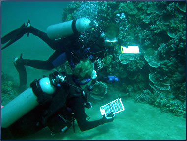 Hawaiian Islands volunteer vacations include coral reef monitoring.