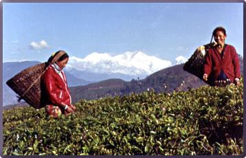 Darjeeling Himalayan Railway, Darjeeling cultural travel, Margaret Deefholts, Haunting India, historic India travel.