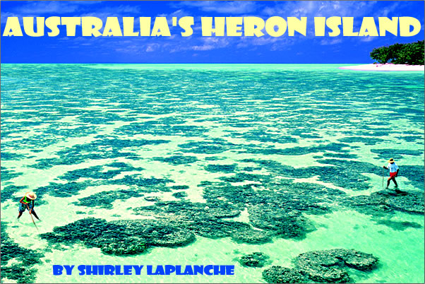 Article on Australia's Heron Island offers nature holidays, Turtles and Birds Galore!