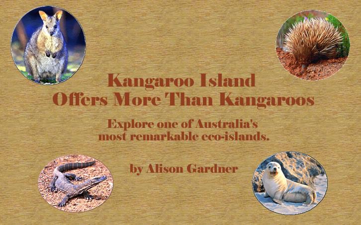 South Australia's Kangaroo Island nature holidays showcase wildlife pictures.