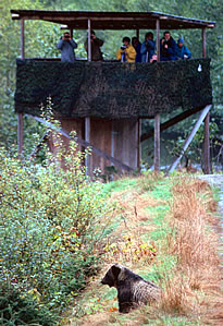 Grizzly bear observation tower, Knight Inlet Lodge..