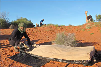 Rolling up the swag after a night's rest: senior adventure camping and trekking in the Australian desert.