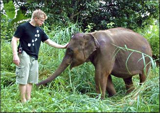 Elephant Refunge and Education Centre, Thailand: Global Volunteer Network travel programs.