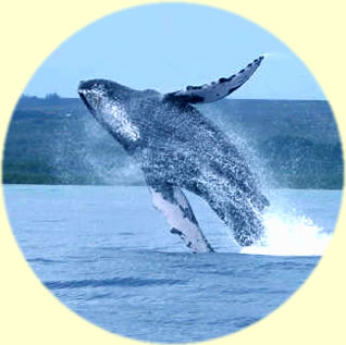 Molokai Fish & Dive offers ocean activities and land tours on Molokai, Hawaii.