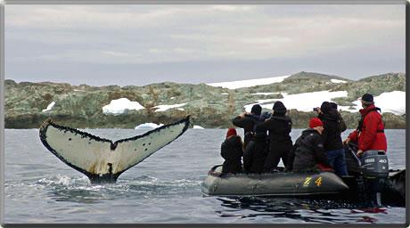 Marine mammal whale watching cruises.