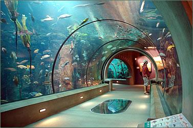 Oregon Coast Aquarium tunnel.